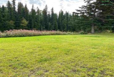 Lot 1 SANTA CLAUS LANE, North Pole, Alaska 99705, ,Land,For Sale,SANTA CLAUS LANE,145077