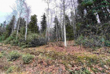 NHN DARLING AVENUE, Fairbanks, Alaska 99709, ,Land,For Sale,DARLING AVENUE,145248