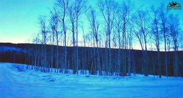 1529 TALL BIRCH LANE, Fairbanks, Alaska 99712, ,Land,For Sale,TALL BIRCH LANE,145945