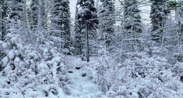 NHN Lot 16 LUCILLE AVENUE, North Pole, Alaska 99705, ,Land,For Sale,LUCILLE AVENUE,145986